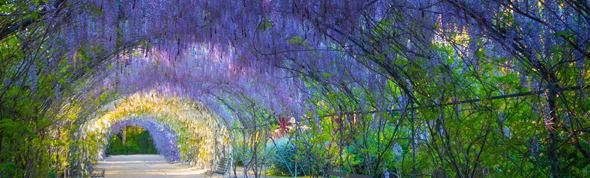 Botanic Garden 590x178