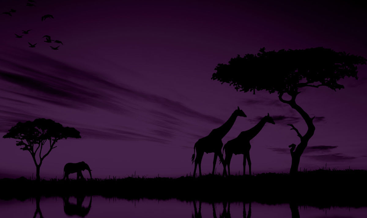 Giraffes and elephants roaming at night