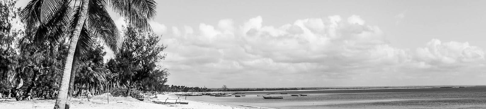 Mozambique beach tree line