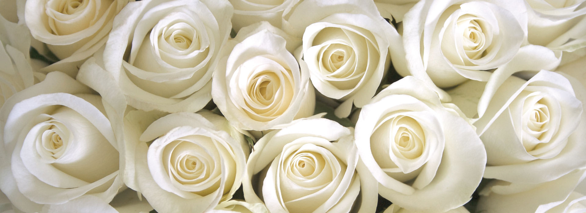 White roses decoration at AVANI Gaborone