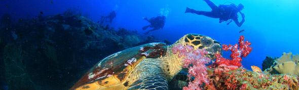 AVANI Pemba - Diving