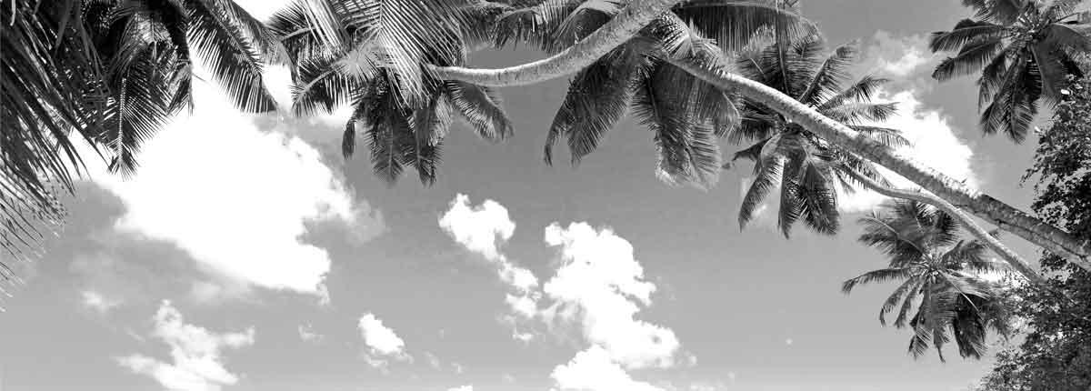 A coconut grove by beach